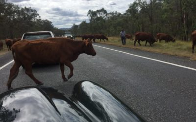 Day 26 – 26th April Armidale to Brisbane – a driving day